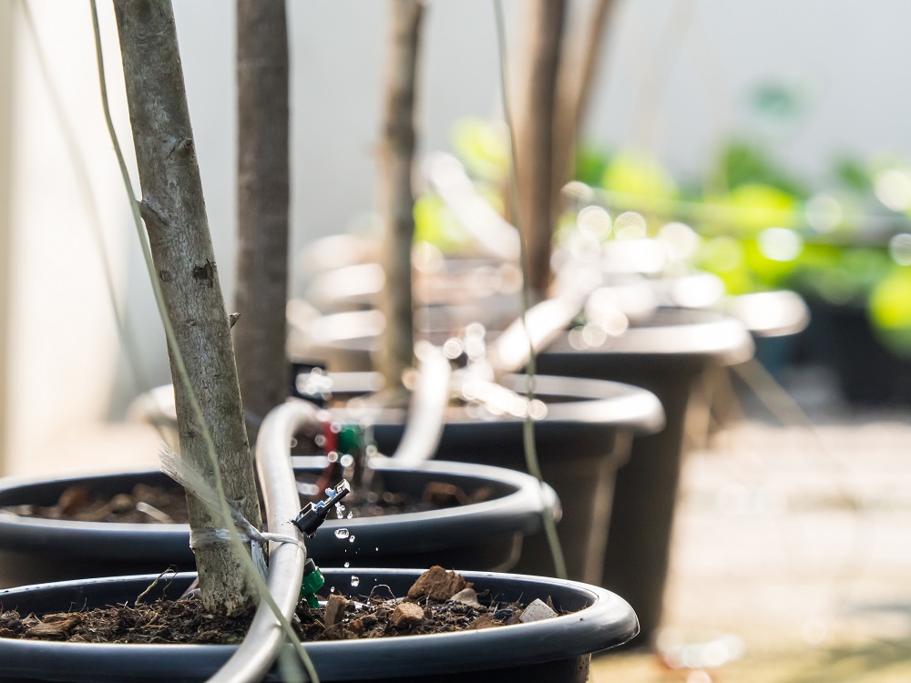 What are the benefits to using an automatic plant watering system indoors?